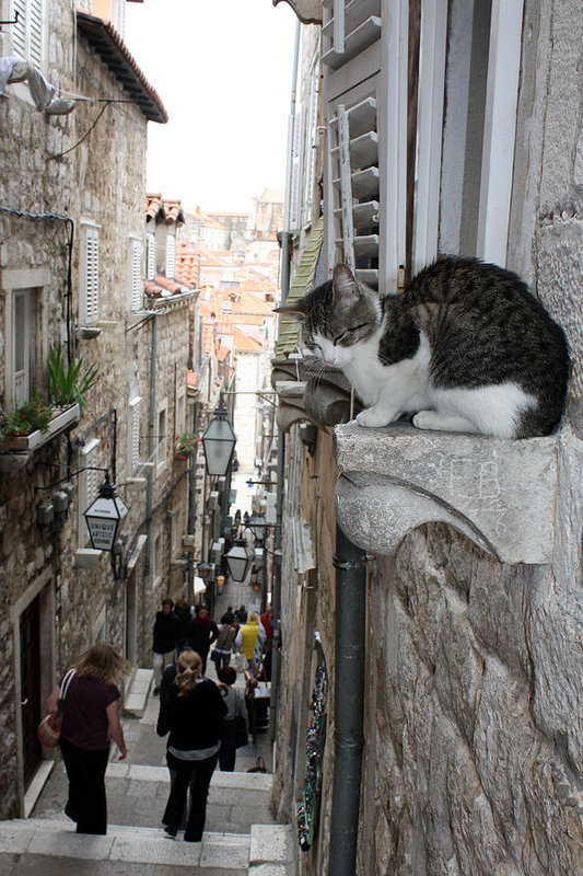 Old Town Alley Cat by David Nicholls