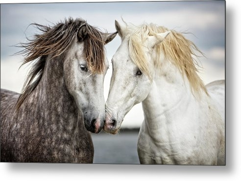 Friends IV - Colour by Tim Booth