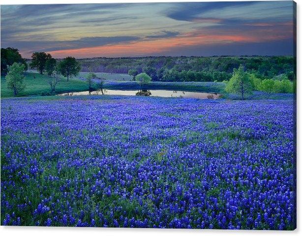 Bluebonnet Lake Vista Texas Sunset - Wildflowers landscape flowers pond by Jon Holiday