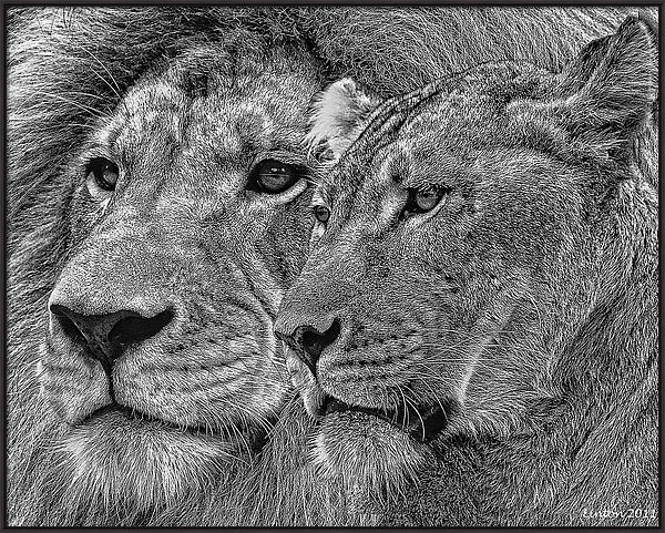 LION KING AND QUEEN by Larry Linton