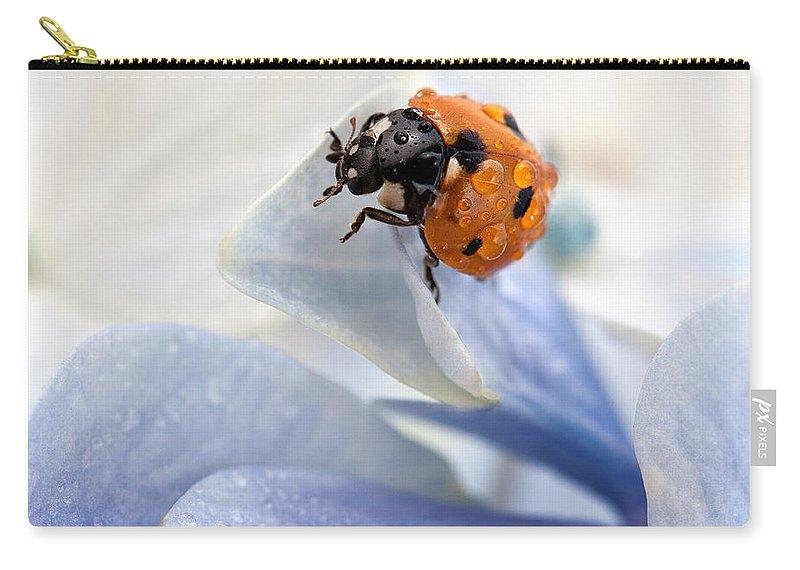 Ladybug by Nailia Schwarz