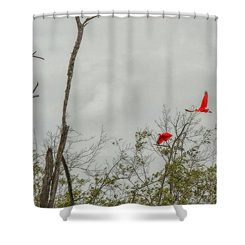 Scarlet Ibis by Patricia Hofmeester