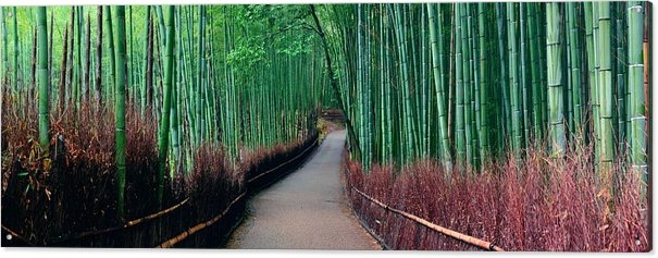 Bamboo Grove by Songquan Deng
