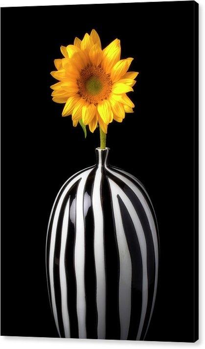 Lovely Sunflower In Striped Vase by Garry Gay