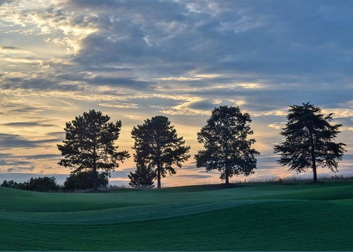 Four Trees at Sunset by Mary Ann Artz