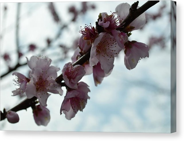 Bloom by Shelby McLellan