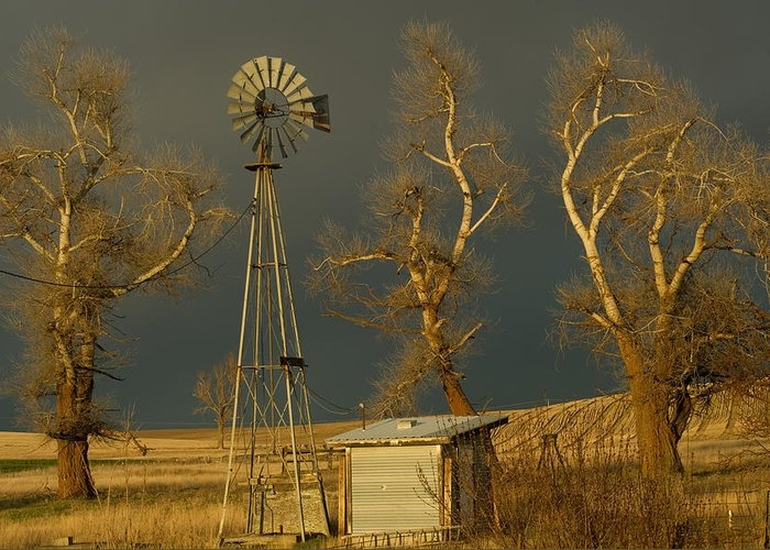 Farm fixtures by Kim Kornbacher