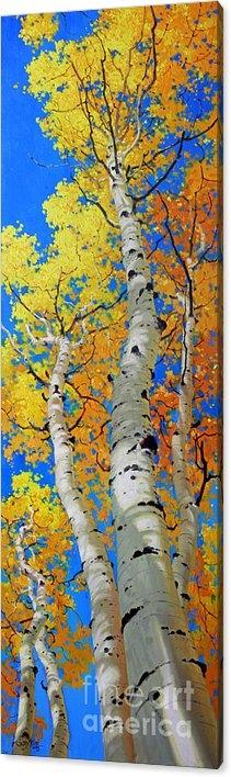 Tall Aspen Trees by Gary Kim