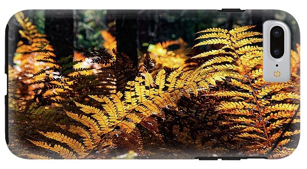 Maine Autumn Ferns by Jeff Folger