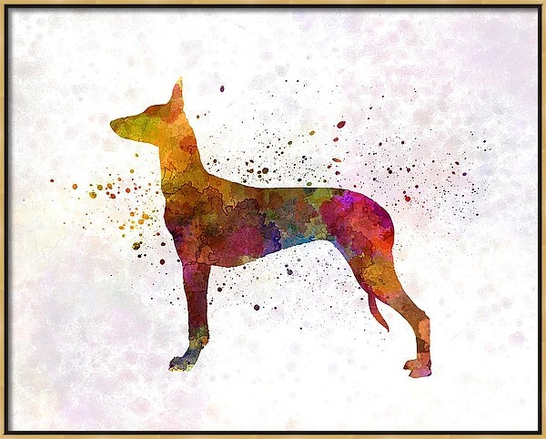 Pharaoh Hound in watercolor by Pablo Romero