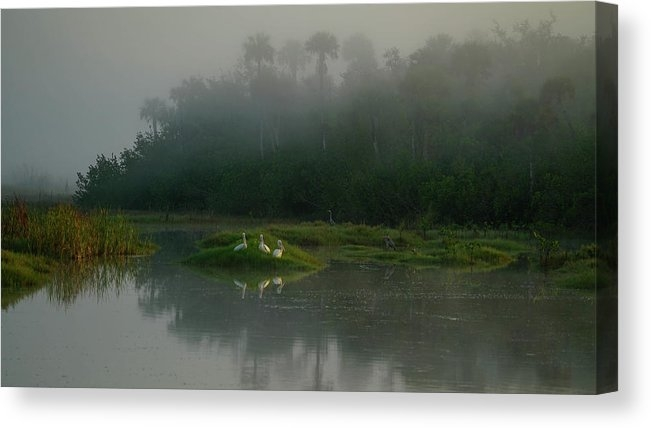 Everglades Foggy morning by Joey Waves