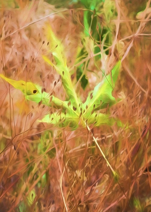 Fallen Leaf by Bonnie Bruno