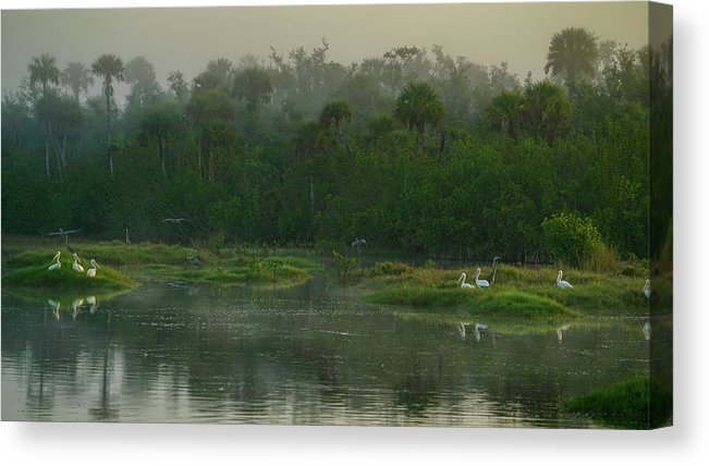 Everglades Birds  by Joey Waves