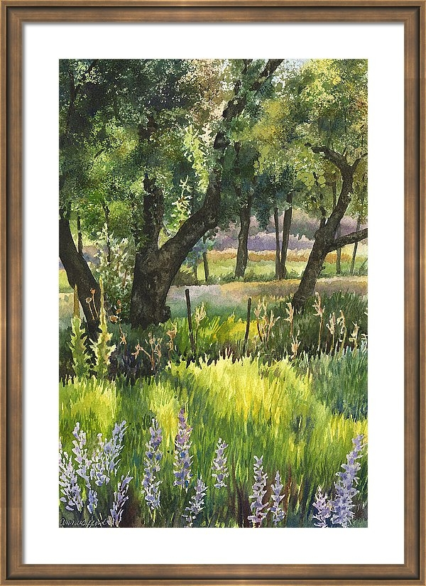 Colorado Evening Shadows Framed Print