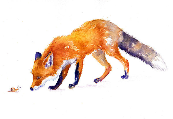 The Fox and the Snail by Debra Hall