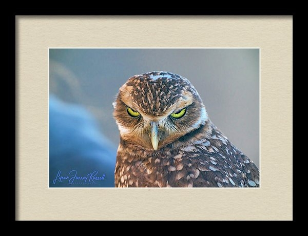 The Look - Burrowing Owl by Lynne  Russell