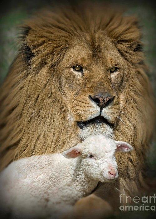 True Companions by Wildlife Fine Art