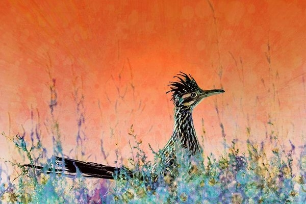 Roadrunner's New Mexico Sunset by Barbara Chichester