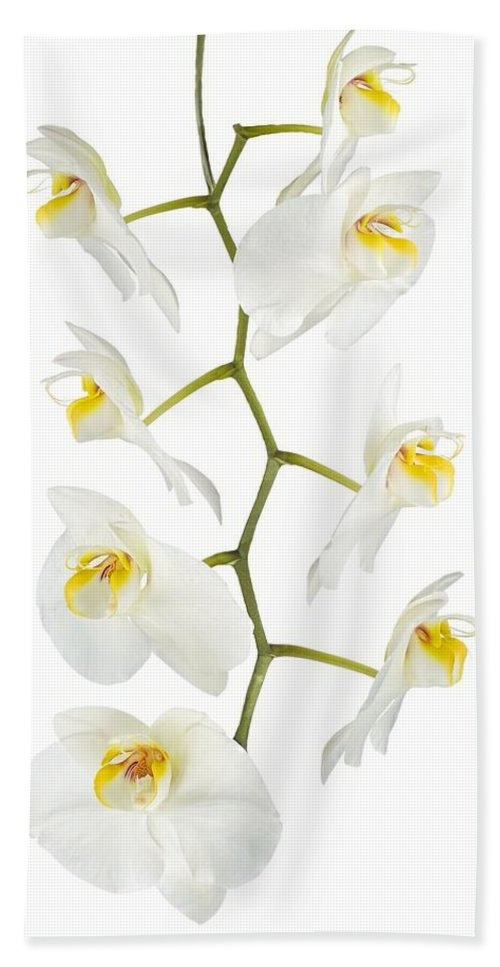 White Orchid-4783 Bath Towel