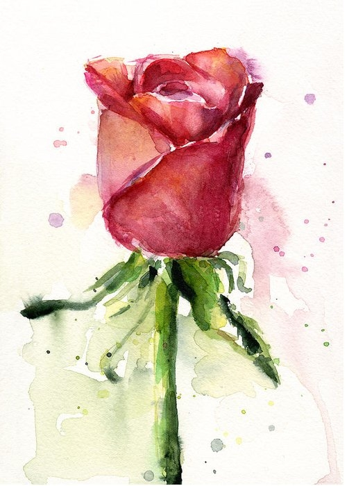 Rose Watercolor Greeting Card