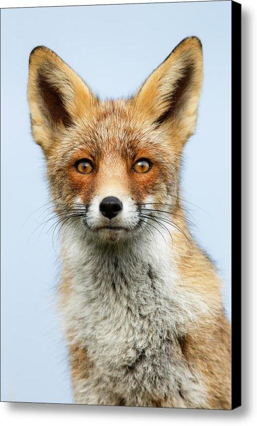 Roeselien Raimond - That Foxy Face Print