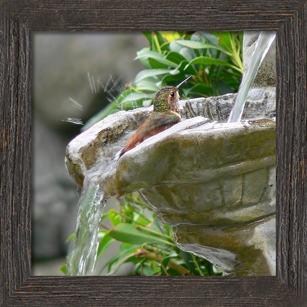 Jennie Marie Schell - Hummingbirds Do Take Bath... Print
