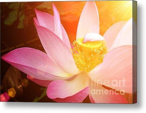 Noppharat Manakul - Blooming lotus flower in ... Print