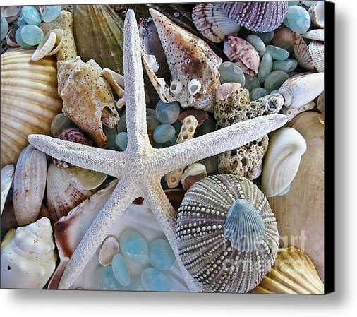 Colleen Kammerer - Sea Treasure Print