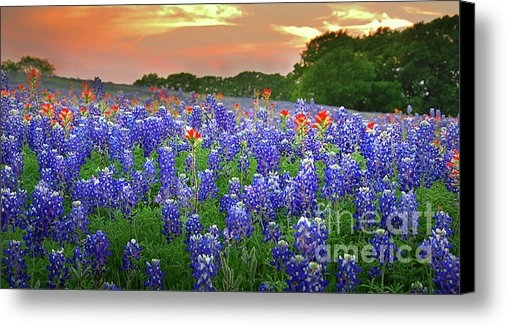 Jon Holiday - Springtime Sunset in Texa... Print