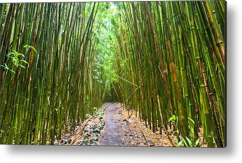 Dustin K Ryan - Bamboo Forest Trail Hana ... Print