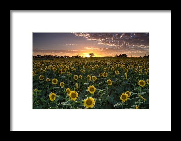 Blake Hamilton - Sunset Flowers Print
