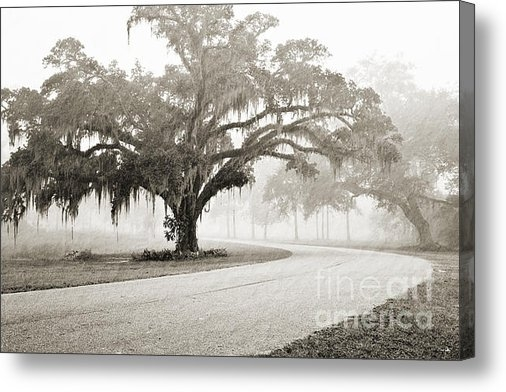 Scott Pellegrin - Proud Oak in the Fog Print