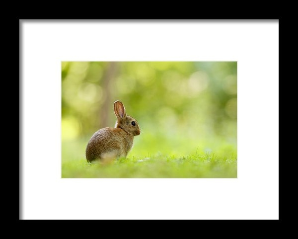 Roeselien Raimond - Baby Bunny in the Forest Print