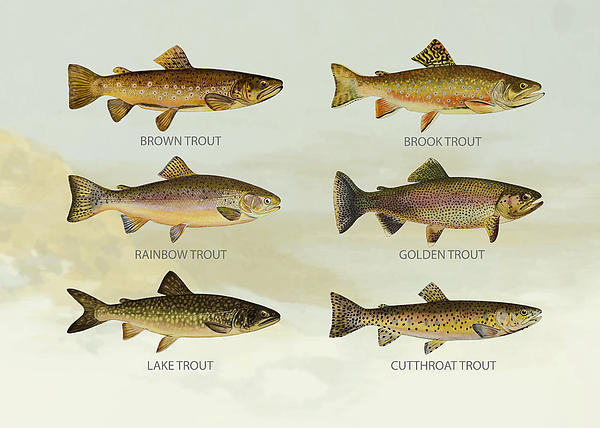 Aged Pixel - Trout Species Print