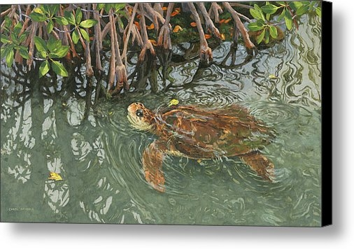 Carol McArdle - Turtle Waters Print